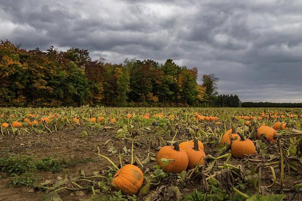Photograph - Thanksgiving Goodies On The Farm Field by Georgia Mizuleva