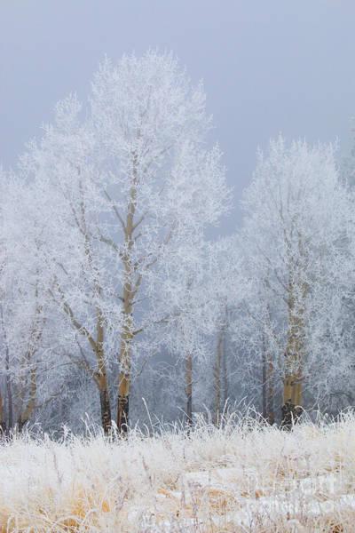 Photograph - Thanksgiving Snow On Bald Mountain by Steve Krull