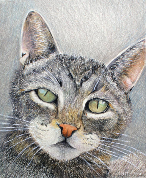 Drawing - That Cat by Tim Ernst