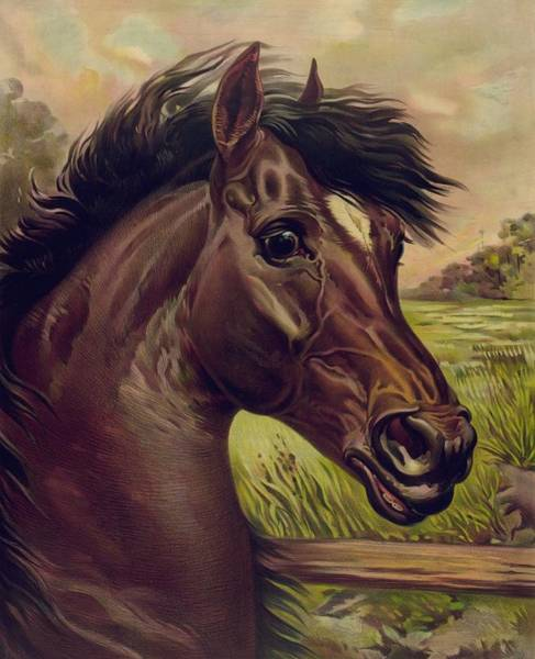 Painting - That Old Chesnut - Horse by Joy of Life Art Gallery
