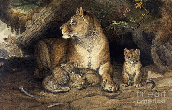 Big Small Painting - The African Lioness by J Smit and Joseph Wolf