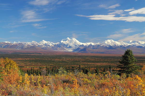 Photograph - The Alaska Range From The Denali Highway by Steve Wolfe