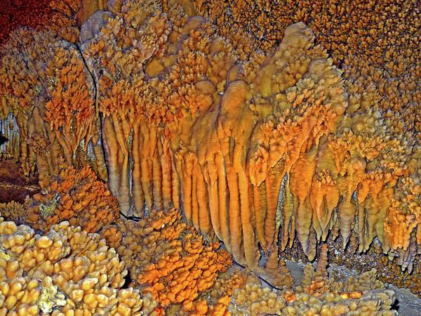 Photograph - The Amazing Crystal Forest 4 by Lynda Lehmann