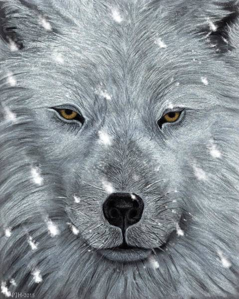 Amber Drawing - The Amber Eyed Wolf by Philip Harvey