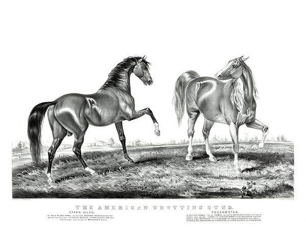 Drawing - The American Trotting Stud 1866 by Currier and Ives Joy of Life Art Gallery