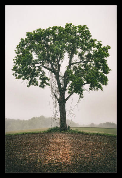 Lancaster Photograph - The Amish Tree by Robert Fawcett