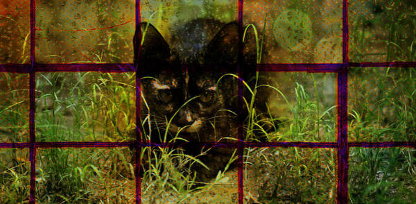 Digital Art - The Angry Cat by Bliss Of Art