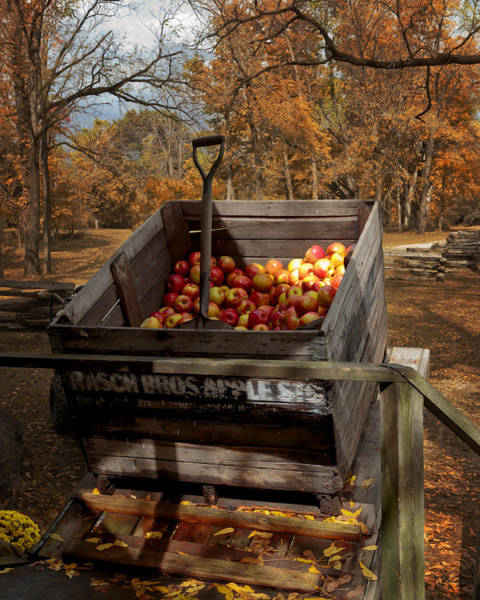 Photograph - The Apple Bin by Susan Rissi Tregoning