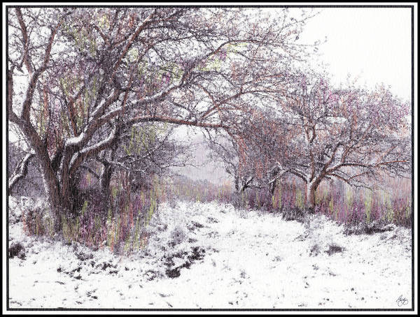 Photograph - The Apples Of Rattlesnake Vale by Wayne King