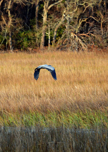 Photograph - The Arc Of A Heron by Bruce Gourley