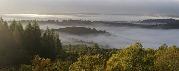 Photograph - The Argyll Forest Shrowded In Mist by Stephen Taylor