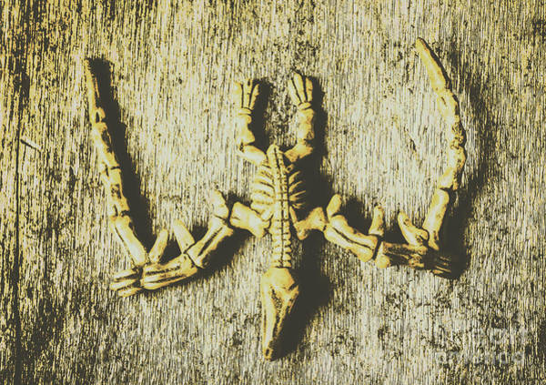 Skeleton Photograph - The Art Of Dinosaur Birds by Jorgo Photography - Wall Art Gallery