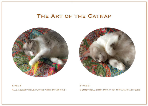 Photograph - The Art Of The Catnap by Bonnie Follett