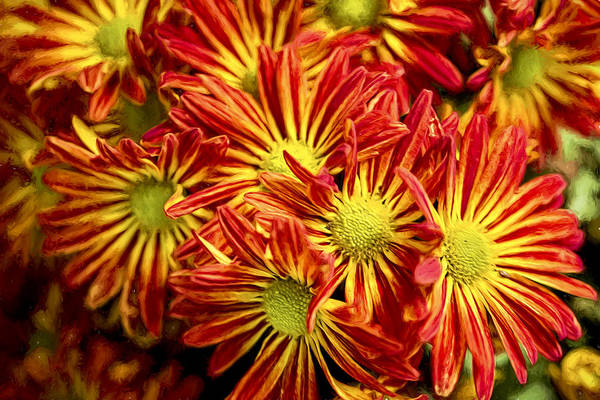 Photograph - Chrysanthemum Bouquet by Kay Brewer