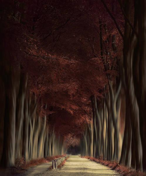 Autumn Leaves Photograph - The Autumn Dream by Rob Visser