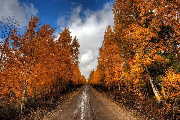 Photograph - Autumn Road Off The Highway by David Andersen