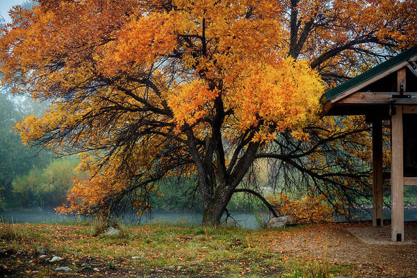Photograph - The Autumn Tree by TL Mair