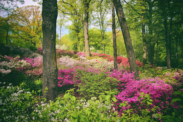 Photograph - The Azalea Woodland by Jessica Jenney