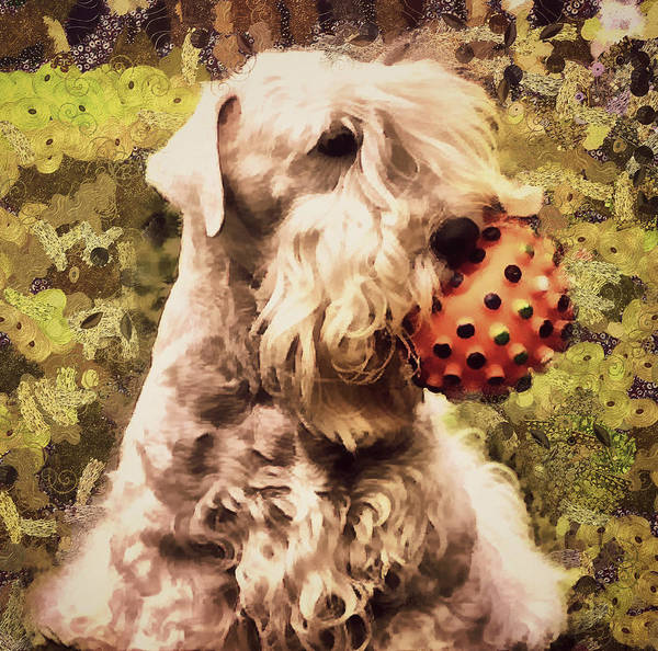Sealyham Terrier Painting - The Ball by Janice MacLellan