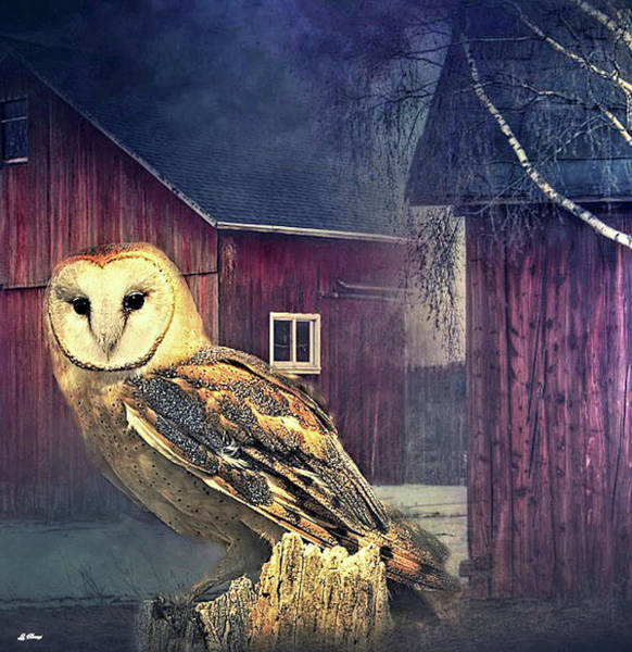 Barn Owl Mixed Media - The Barn Owl 02 by G Berry