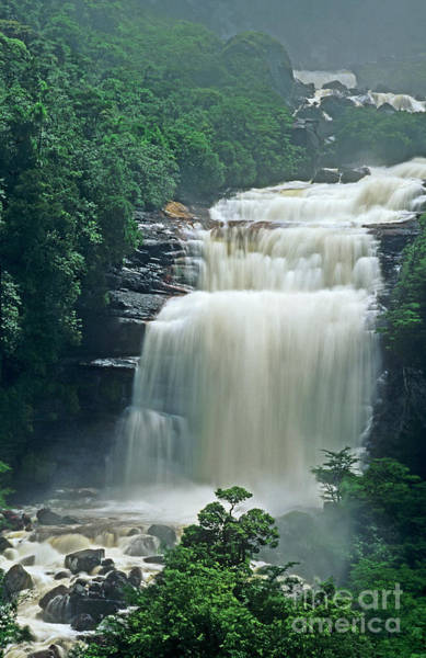 Photograph - The Base Of Angel Falls In Canaima National Park Venezuela by Dave Welling