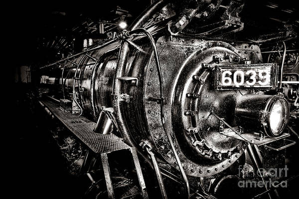 Wall Art - Photograph - The Beast by Olivier Le Queinec