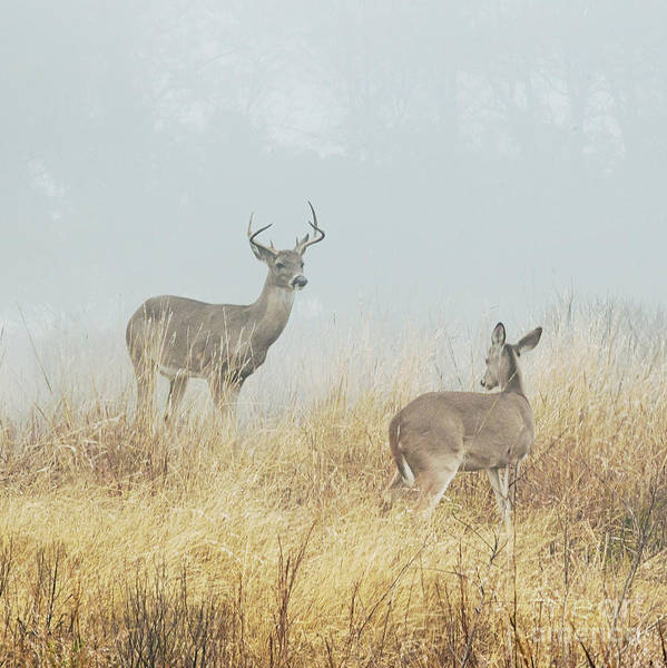 Deer Photograph - The Beautiful Creatures by Katya Horner