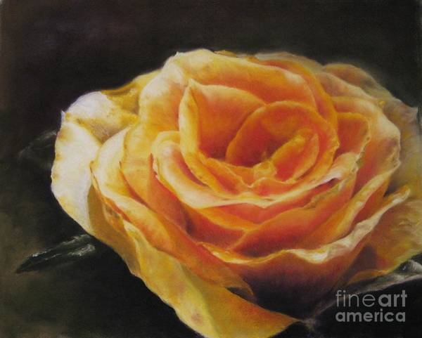 Wall Art - Painting - The Beauty Of A Rose by Sabina Haas