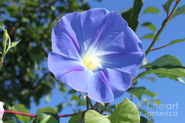 Photograph - The Beauty Of Blue  by Cathy Beharriell