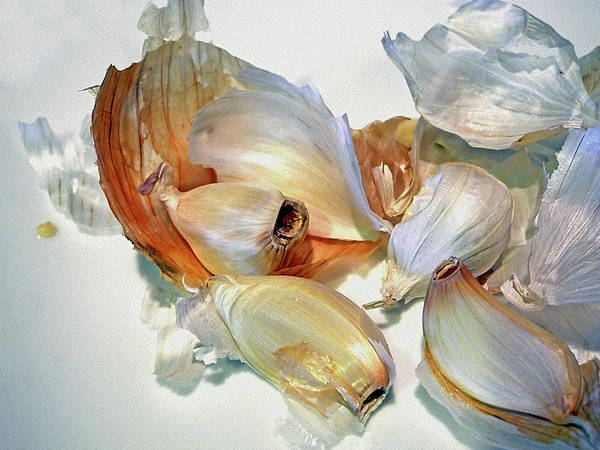 Photograph - The Beauty Of Garlic by Lynda Lehmann
