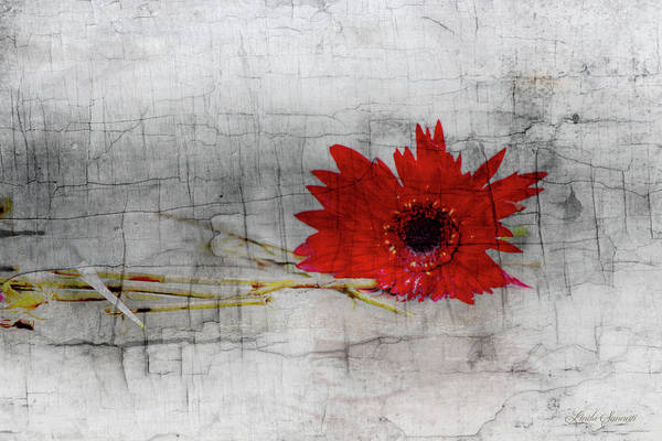 Wall Art - Photograph - The Beauty Of Imperfection by Linda Sannuti