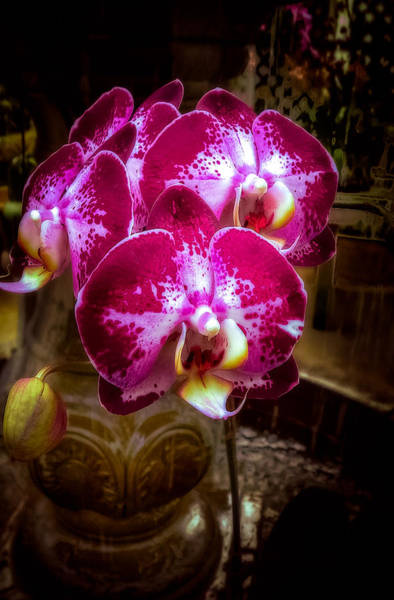 Photograph - The Beauty Of Orchids by Julie Palencia