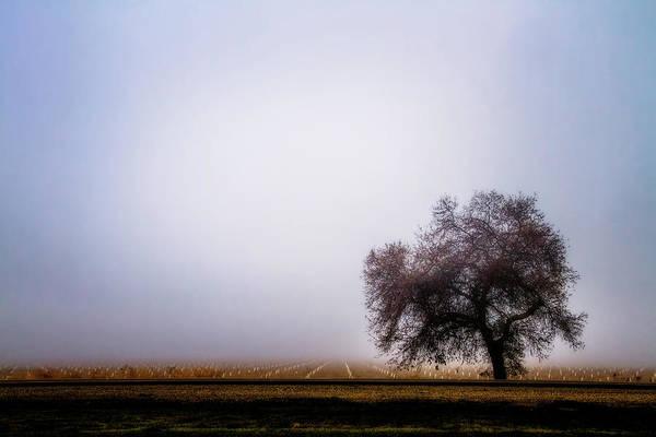 California Oak Digital Art - The Beauty Of The Land by Terry Davis