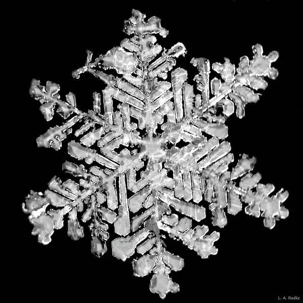 The Beauty Of Winter Art Print