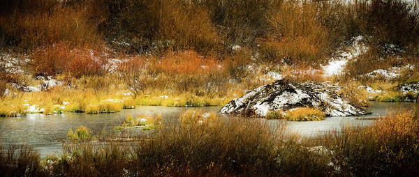 Photograph - The Beaver Lodge by TL Mair