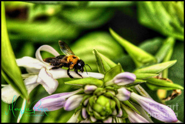 Photograph - The Bee by MaryLee Parker