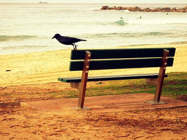 Photograph - The Bench And The Blackbird by VIVA Anderson