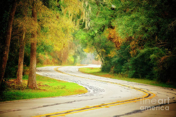 Brazos Bend State Park Wall Art - Photograph - The Bend by Katya Horner