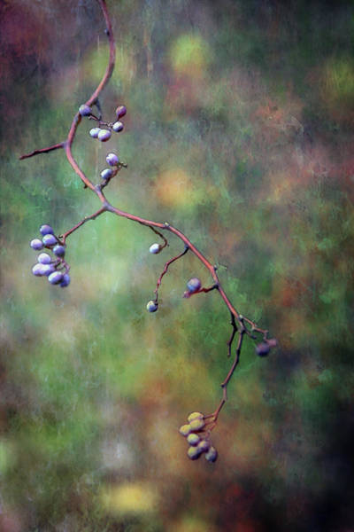 Photograph - The Berries Path 6574 Ldp_2 by Steven Ward