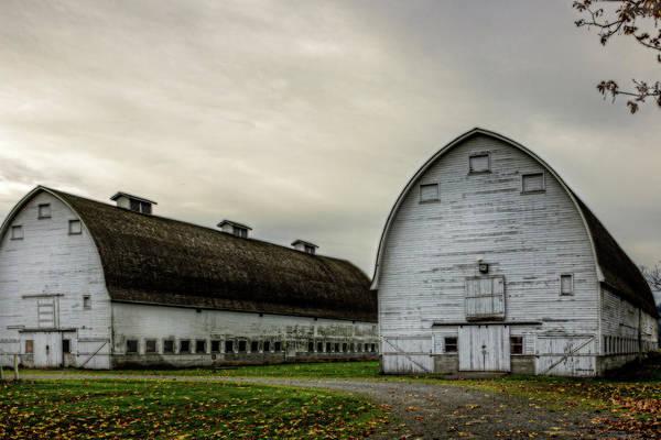 Photograph - The Big Barns by Barry Jones
