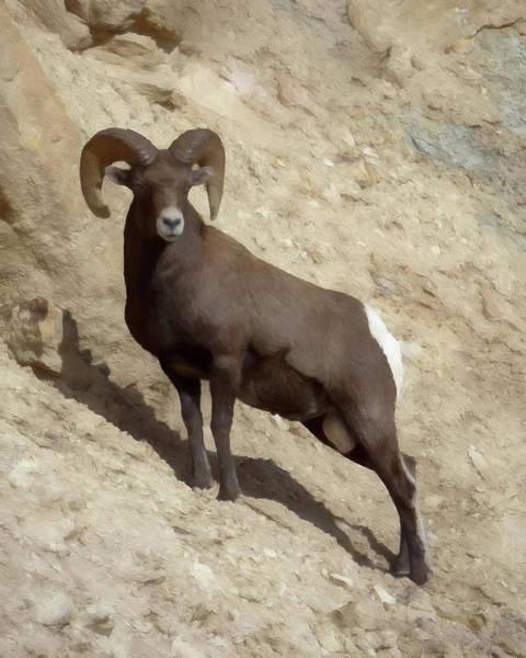 Colorado Wildlife Digital Art - The Big Horn Da1 by Ernie Echols