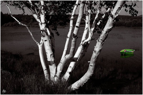 Photograph - The Birch And The Green Dingy by Wayne King