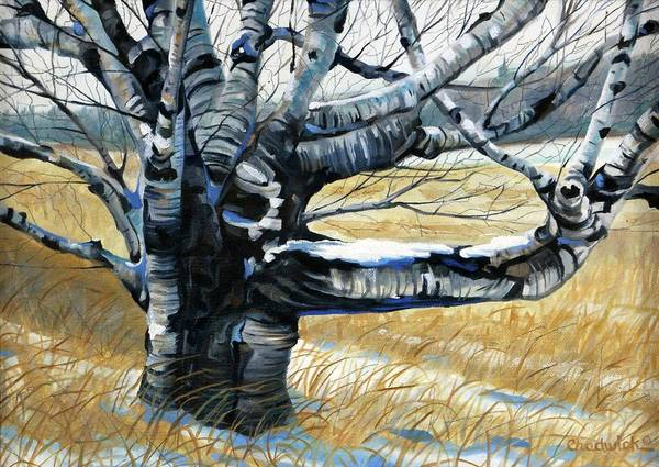 Watershed Painting - The Birch by Phil Chadwick