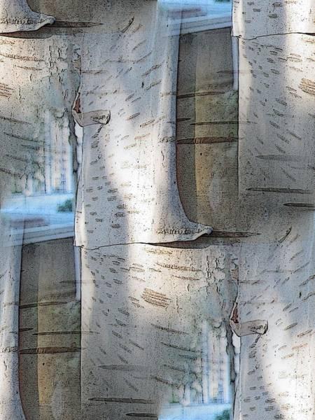 Arbor Digital Art - The Birch by Tim Allen