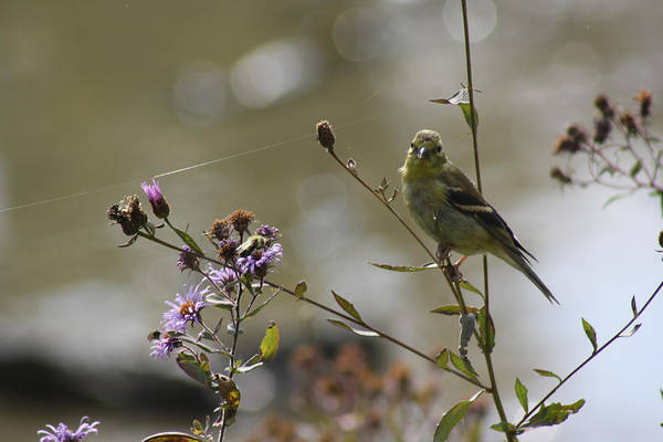 Photograph - The Birds And The Bees  by Cathy Beharriell