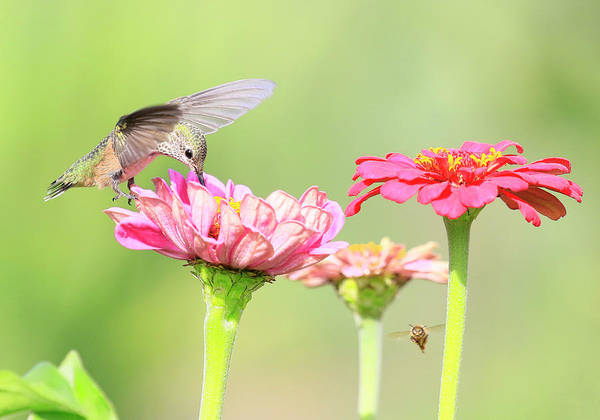 Wall Art - Photograph - The Birds And The Bees by Steve McKinzie