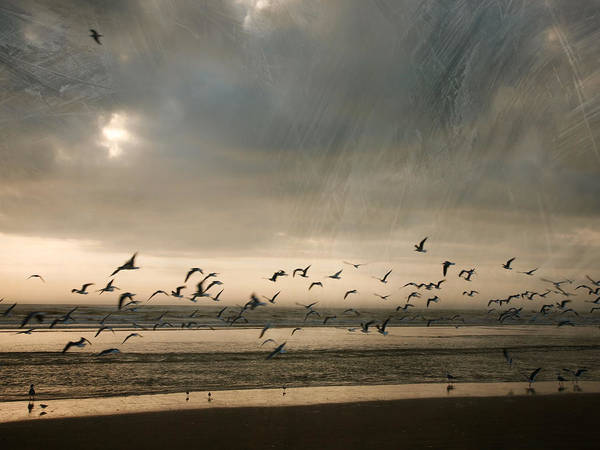 Photograph - The Birds by Charles McKelroy