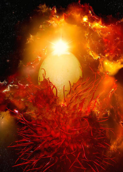 James Temple Photograph - The Birth Of Planet Rambutan by James Temple