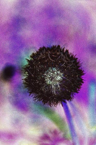 Photograph - The Black Dandolion by Lesa Fine