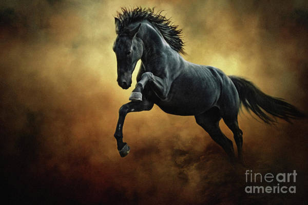 Photograph - The Black Stallion In Dust by Dimitar Hristov